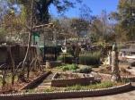 Howard Finser Garden
